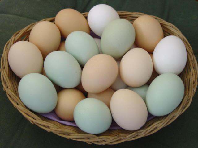 Celebrate the Egg
